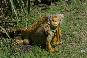 CostaRica Fauna