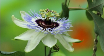 Blumenschau